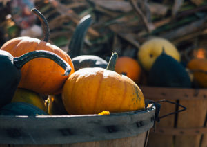 Pumpkins in basket photo by Aaron Burden on Unsplash https://unsplash.com/@aaronburden