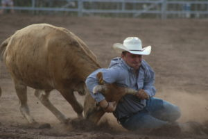 cowboy on knees in blue shirt white hat wrestling steer by neck at at rodeo