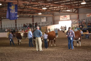 cattle and people standing on brown dirt floorinside of arena