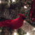 close up of christmas tree with white lights red cardinal and red teardrop ornaments