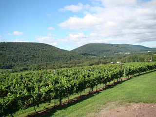 rows of green grape plants in vineyard with evergreen covered hills in background, blue sky with white cumulus clouds