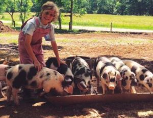 6 Black and white pigs at trough with young woman in tan overalls