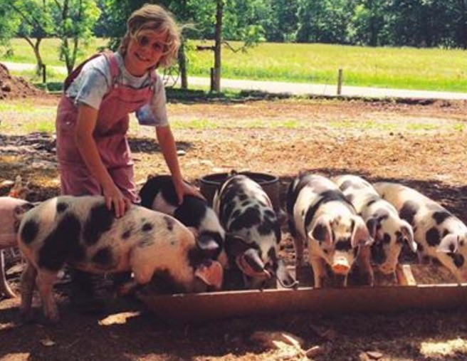 Black and white pigs at trough with young woman in brown overalls and white shirt
