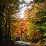 Winding dirt road bordered by tall trees with autumn foliage against gray sky