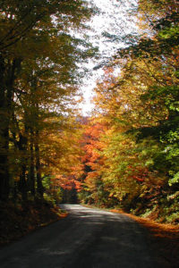 Winding dirt road bordered by autumn trees