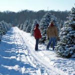 two people in jeans and 1 brown 1 red jacket looking at trees in rows at Christmas Tree Farm with snow covered tracks in middle