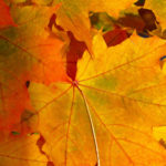 closeup of red, orange, and gold fall leaves