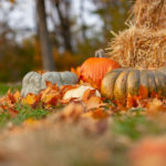 gourds and orange pumpkin on ground beside brown hay bales