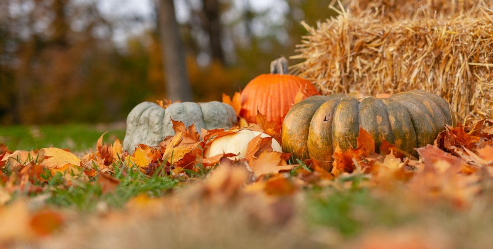 gourds and orange pumpkin on ground beside brown hay bales