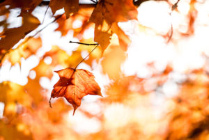 Photo of fall leaves by Matt Lewis on Unsplash https://unsplash.com/@mattylew