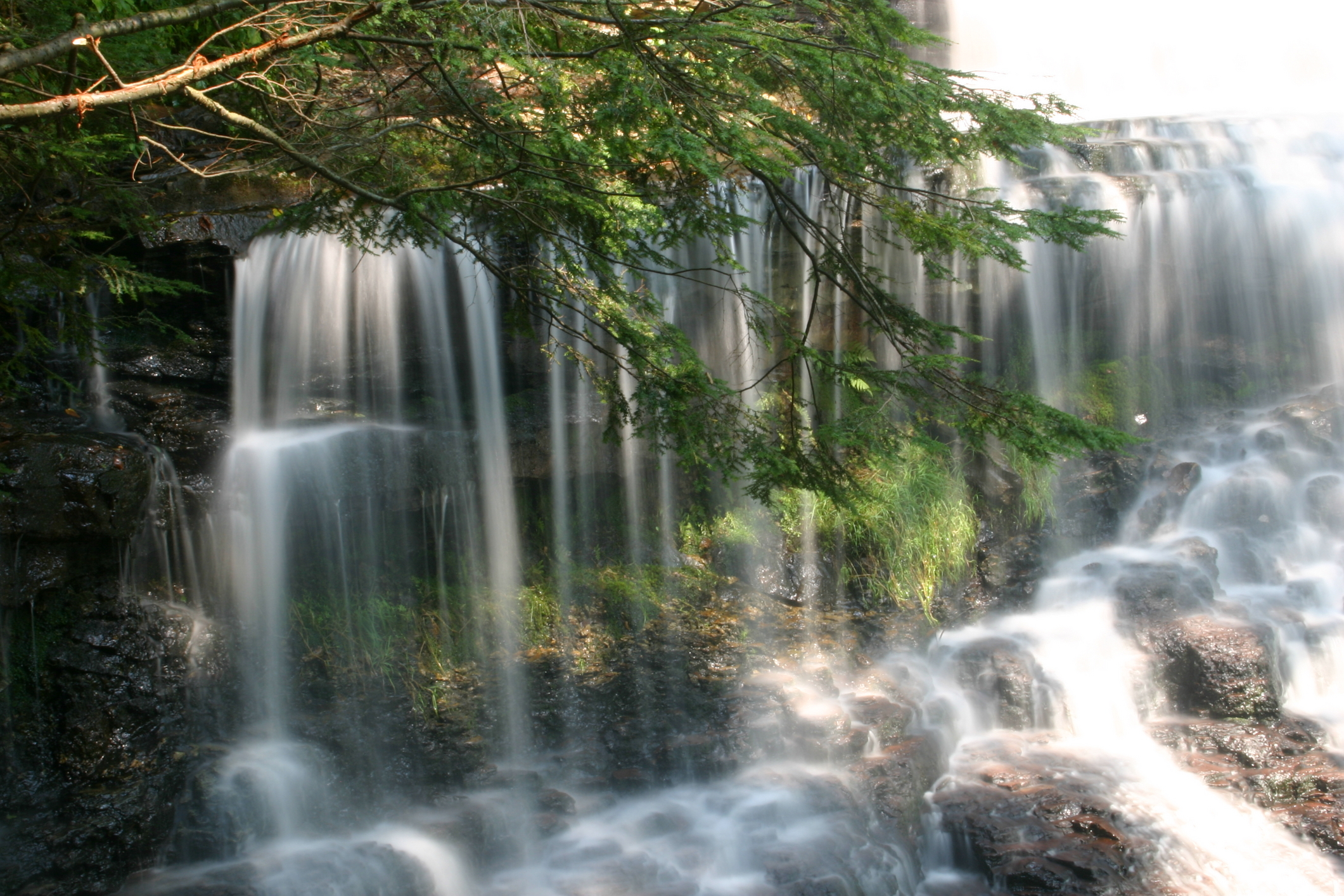 brown branch with green leaves extending in front of wide waterfall with water hitting rocks at bottom